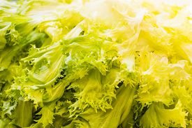 stock photo of endive  - Close up shot of a green and yellow endive as a background - JPG