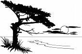 Montereycypressscene
