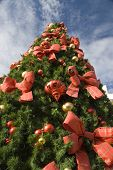 Tall Christmas Tree