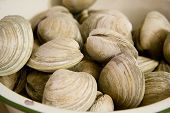 Clams In A Bowl