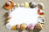 border summer shells frame composition over beach sand beach with blank paper