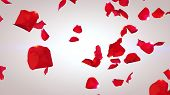 Flying Petals Of Red Roses poster