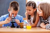picture of eminent  - Eminent elementary school boy looking into microscope while girls are watching - JPG