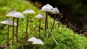 Kleine champignons