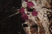 Tiny Purple Mushrooms In The Forest Are On The Trunk Of The Trunk. poster