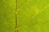 Green Leaf Seamless Texture. Detail Close Image Leaf Macro Seamless Texture Pattern. Macro Close-up  poster