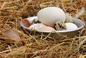 Fresh Eggs In The Old Bowl