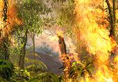 Amazon Rainforest Burning, On Fire, Out Of Control, Enhancing Climate Change, 3d Render Painting, poster