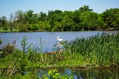 White Rock Lake Landscape