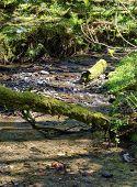 Woodland Stream, Borough Valley, Lee, North Devon, Uk poster