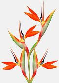 Beautiful Bright Bird Of Paradise Bouquet