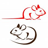image of rats  - Vector image of an rat on a white background - JPG