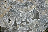 Abstract pattern of lichen on a stone