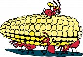 Ants And Corn