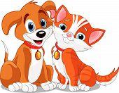 Cat N Dog