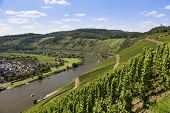 stock photo of moselle  - Aerial view of German river Moselle near Punderich - JPG
