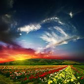 Beautiful landscape with colored flowers and sky