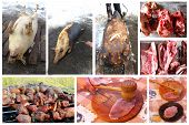 foto of loin cloth  - all stages of process whith passes meat from the slaughter to tasty fresh dish - JPG
