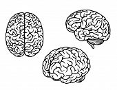 picture of medical  - Human brain in three planes for medical design - JPG