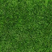 Green grass seamless texture. Seamless in only horizontal dimension.
