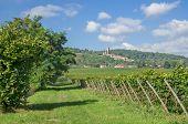 Wachenheim,german Wine Route,Rhineland-Palatinate