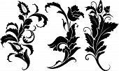 Elemento de flor para Design