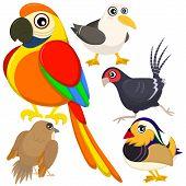 five colorful cute birds