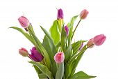 Bouquet Of Pink Dutch Tulips In Closeup