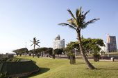picture of beachfront  - trees lining Durban