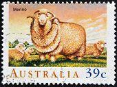 AUSTRALIA - CIRCA 1989: A Stamp printed in Australia shows the Merino circa 1989