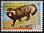 EQUATORIAL GUINEA - CIRCA 1974: Stamp printed in Guinea shows Raccoon dog Europe