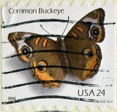 UNITED STATES OF AMERICA - CIRCA 2006: stamp printed in USA shows butterfly common buckeye