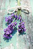 Summer Lavender Meadow