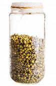 Wet Sprouting French Lentils In A Glass Jar