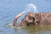 Elephant Plays Water