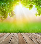 Fresh spring green grass and wood floor with green leaf , Summer time