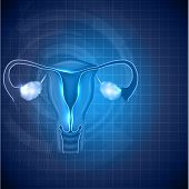Постер, плакат: Female Reproductive System Background Uterus And Ovaries