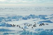 Penguin Group In Icescape