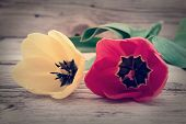 Red And Yellow Tulips On A Rustic Wooden Background