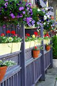 Restaurant patio fence with colorful flowers
