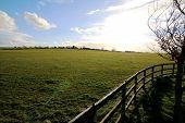 Green Field...