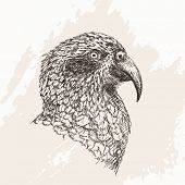 Kea parrot Vector Sketch Hand drawn illustration