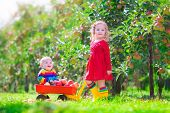 Two Children Playing In An Apple Garden