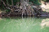Raiz de árvore com água reflexão