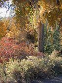 Autumn Shrubs