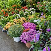 The Shop Of Plant And Trees For Gardening