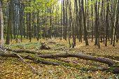 The Hornbeam Forest