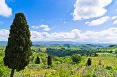 Hills, vineyards and cypress trees, Tuscany landscape near San Gimignano