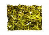 Dry Roasted Seaweed Isolated On White