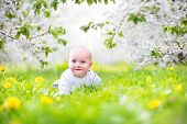 Cute Little Baby In A Blooming Spring Apple Garden